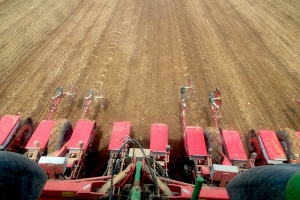 Sugar Beet Drilling with tramlines